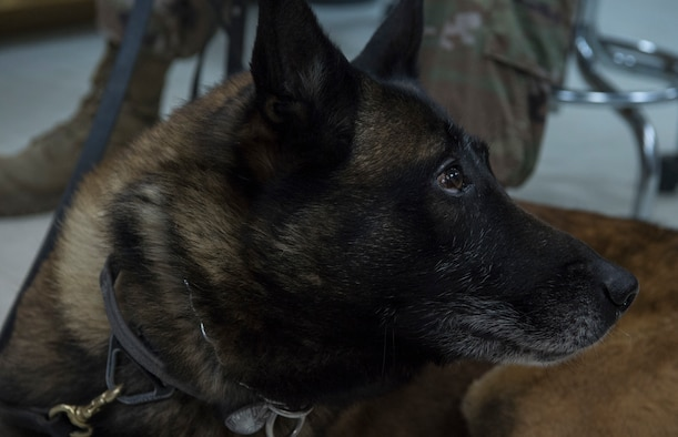 Army, Air Force K-9 dental team keep bite in the fight