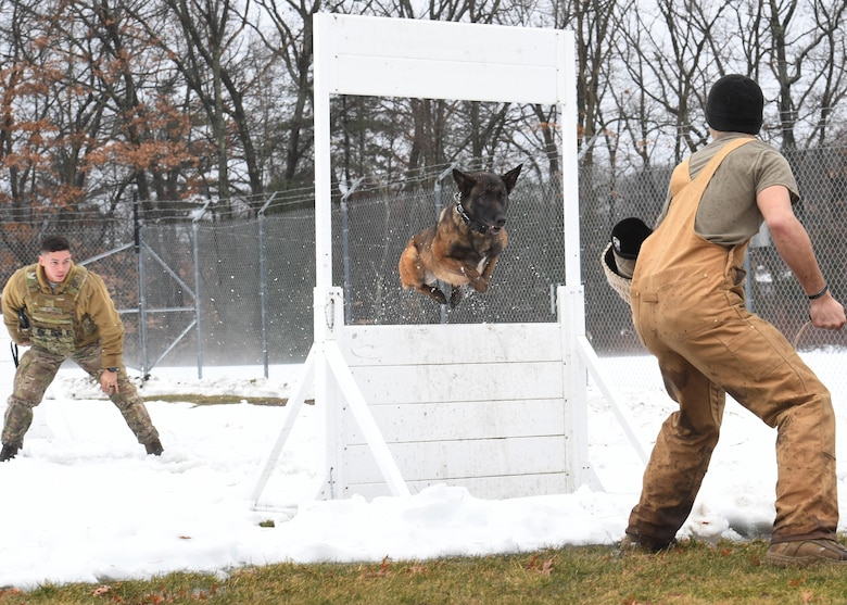 A military working dog jumps through an obstacle for training