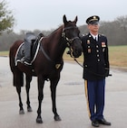 "Chandler, the Fort Sam Caisson Platoon's newest ""Cap"" horse, stands during the Feb. 5, 2019 funeral for retired Brig. Gen. Joseph D. Schott . Staff Sgt. Joshua Rightenour, a member of the Caisson platoon, holds his reins. Rightenour said participating in military funerals is a ""very humbling experience."" He added ""everyone we do these services for served honorably. It's just one little thing we can give back to them."""