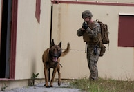 U.S. Marine Lance Cpl. William Burkle, with 3rd Law Enforcement Battalion, 3rd Marine Expeditionary Force sweeps the area for explosive devices with his K-9 partner Bbaldur at Combat Town, Okinawa, Japan, Feb. 21, 2018. U.S. Marines utilize K-9 units to help sniff out possible bombs in the area as well as swiftly take out a target on command.