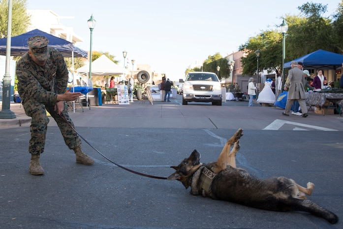 "U.S. Marine Corps Cpl. Abel Ornelas, dog handler, Headquarters and Headquarters Squadron, Marine Corps Air Station Yuma, has Military Working Dog Cato ""play dead"" during Yuma Military Appreciation Day in Downtown Historic Yuma on Feb. 16, 2019. Military Appreciation Day is held to show the importance of the relationship between the City of Yuma and our service members and veterans. (U.S. Marine Corps photo by Sgt. Allison Lotz)"