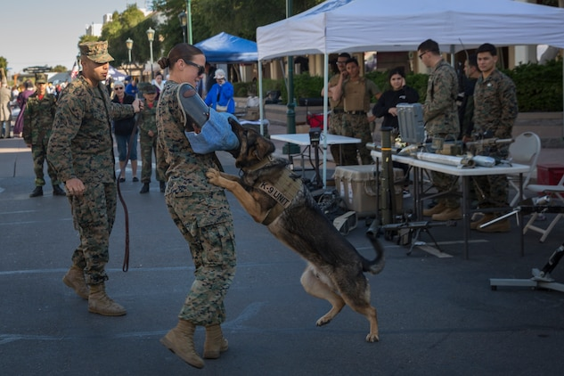 U.S. Marines with Marine Corps Air Station Yuma, conduct a military working dog demonstration during Yuma Military Appreciation Day in Downtown Historic Yuma on Feb. 16, 2019. Military Appreciation Day is held to show the importance of the relationship between the City of Yuma and our service members and veterans. (U.S. Marine Corps photo by Sgt. Allison Lotz)