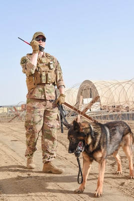 Staff Sgt. David Bafaro, 380th Expeditionary Security Forces Squadron military working dog handler, calls in the results of his search with MWD Simon during a joint training event Jan. 15, 2019 at Al Dhafra Air Base, United Arab Emirates.