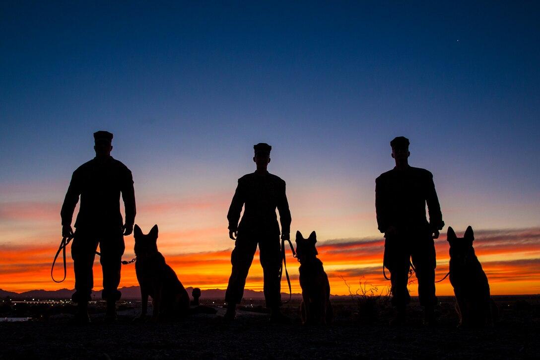 Three Marines each stand next to three dogs.