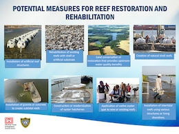 Potential Measures for Reef Restoration and Rehabilitation