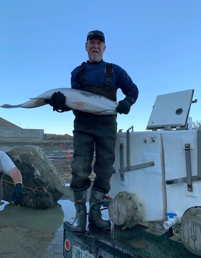 JOHN MARTIN RESERVOIR, Colo. -- A Colorado Parks & Wildlife hatchery worker transfers a large striper into the hatchery truck, Nov. 1, 2018.