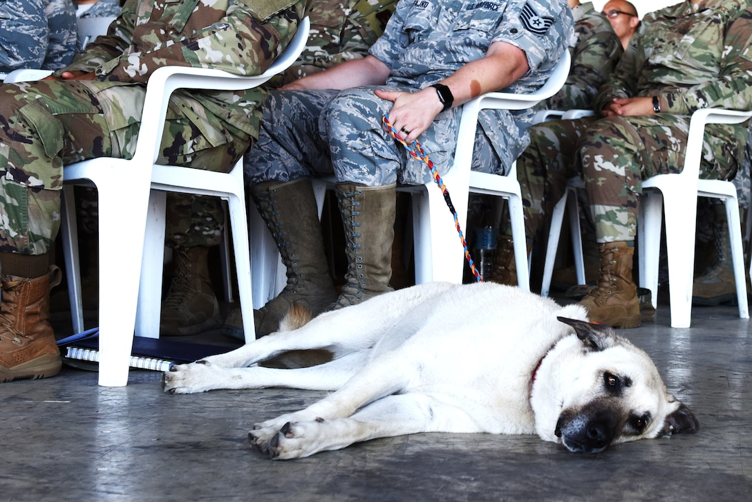 Jinx, 39th Communications Squadron mascot, lies on the ground during the 39th Air Base Wing Change of Command Ceremony July 2, 2019, at Incirlik Air Base, Turkey. Units in the Air Force may sometimes adopt animals to represent their squadron and boost morale. (U.S. Air Force photo by Senior Airman Joshua Magbanua)