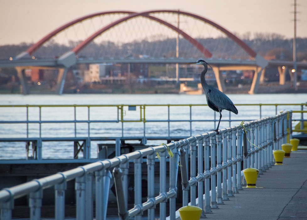 blue heron sits on structure overlooking river