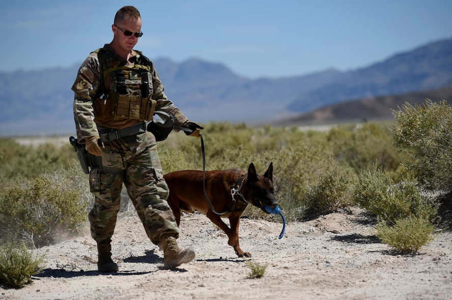MWDs are trained and capable of detecting explosives and narcotics, as well as locate a potential suspects or missing persons.