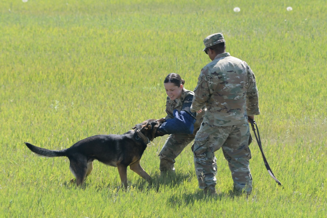 """The 341st Security Forces Squadron perform a K-9 team demonstration July 13, 2019, at the """"Mission Over Malmstrom"""" open house event on Malmstrom Air Force Base, Mont."""