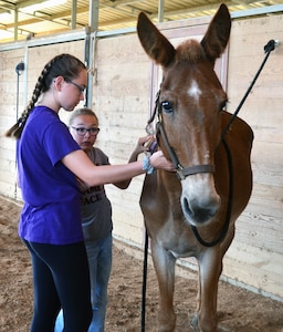 Sisters Mackenzie (left) and Madeline Wood (right) brush a horse during the Joint Base San Antonio Exceptional Family Member Program Equestrian Camp at the JBSA-Fort Sam Houston Equestrian Center June 27. The three day camp, held June 25-27, gave special needs children from military families and their siblings the opportunity to learn about horsemanship and to ride horses.