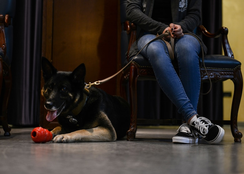 Military Working Dog Cigan lays down during his retirement ceremony at Aviano Air Base, Italy, July 19, 2019. MWD Cigan has worked at Aviano since September 2015. (U.S. Air Force photo by Staff Sgt. Rebeccah Woodrow)