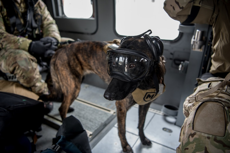Callie, a search and rescue dog for the Kentucky Air National Guard's 123rd Special Tactics Squadron, rides in a UH-60 Black Hawk helicopter as part of her familiarization training at the Boone National Guard Center in Frankfort, Ky., Nov. 29, 2018. Callie is currently the only search and rescue dog in the Department of Defense. (U.S. Air National Guard photo by Staff Sgt. Joshua Horton)