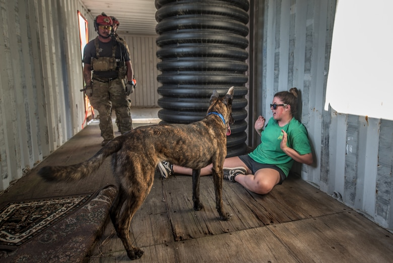 Callie, a search and rescue dog for the Kentucky Air National Guard's 123rd Special Tactics Squadron, alerts Master Sgt. Rudy Parsons, her handler, after locating a simulated casualty July 17, 2019, during Patriot North, an annual domestic operations exercise designed to provide natural disaster-response training at Volk Field, Wis. Callie is currently the only search and rescue dog in the Department of Defense. (U.S. Air National Guard photo by Staff Sgt. Joshua Horton)