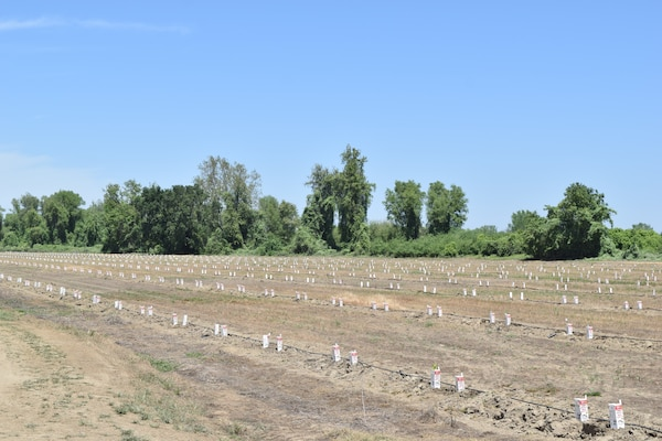 Sacramento District's Hamilton City project combines flood management with