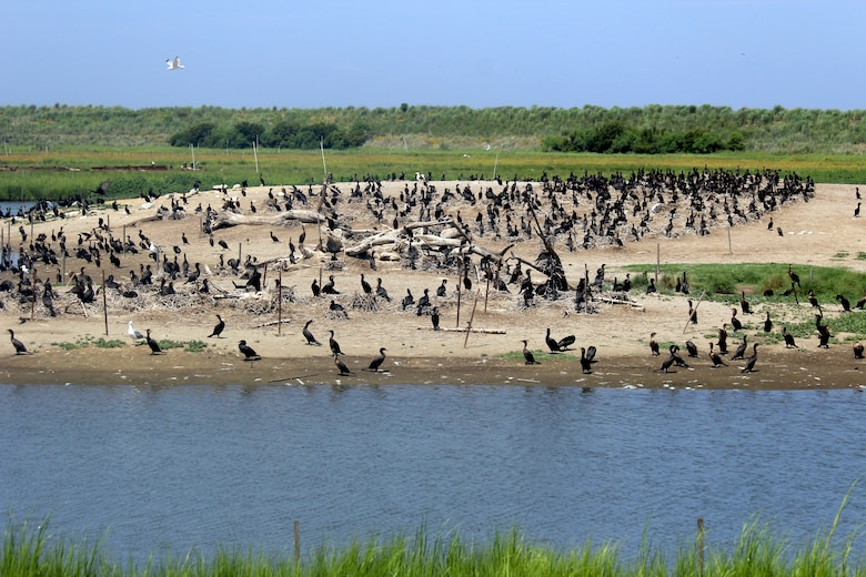 Hundreds of birds sit perched in a containment cell at Poplar Island in July 2016. The habitat being built at Poplar Island using dredged material from the approach channels to the Port of Baltimore has attracted hundreds of bird species and reptiles including osprey, eagles, terns and terrapins. The island's location in the upper-middle Chesapeake Bay makes it an ideal location for mid-Atlantic migratory birds and other wildlife.