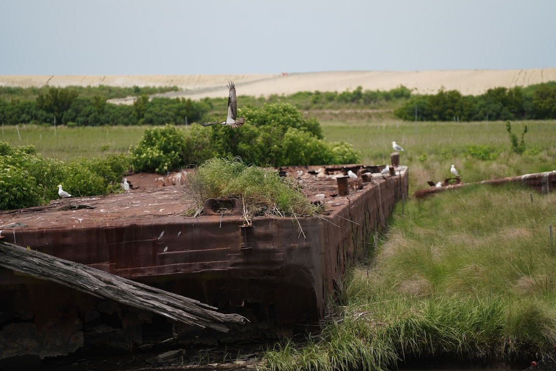 Barges placed to help prevent the erosion of the last remaining remnants of Poplar Island are now bird habitat in the middle of a dredged material containment cell at Poplar Island.