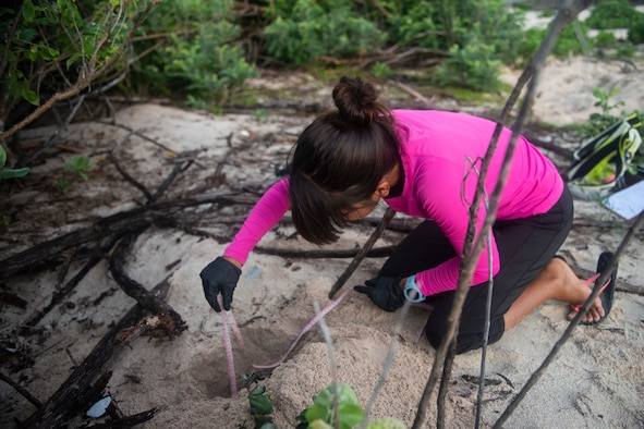 Leilani Sablan, a Sea Turtle Biologist with the University of Guam measures the depth of a nest of the endangered Green Sea Turtle July 25, 2019 at Andersen Air Force Base, Guam.