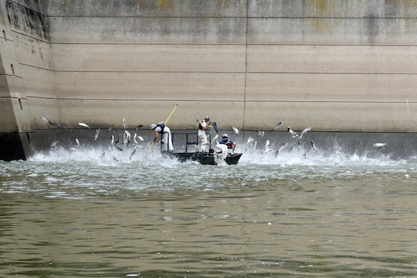 (Left to right) Josh Tompkins, fisheries biologist; Nathan Rister, fisheries technician; and Matt Combs, fisheries biologist; Kentucky Department of Fish and Wildlife Resources Agency, demonstrate electrofishing for Asian Carp on the Cumberland River next to Barkley Dam in Grand Rivers, Ky., July 30, 2019. The U.S. Army Corps of Engineers, U.S. Fish and Wildlife Service, Kentucky Department of Fish and Wildlife Resources, U.S. Geological Survey and Tennessee Wildlife Resources Agency are collaborating on the deployment of a bio-acoustic fish fence on the downstream side of Barkley Lock as part of a test of this sound deterrent to reduce the use of the locks by Asian Carp.  (USACE photo by Lee Roberts)