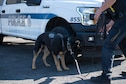 Law enforcement dogs train at Portland Air National Guard Base