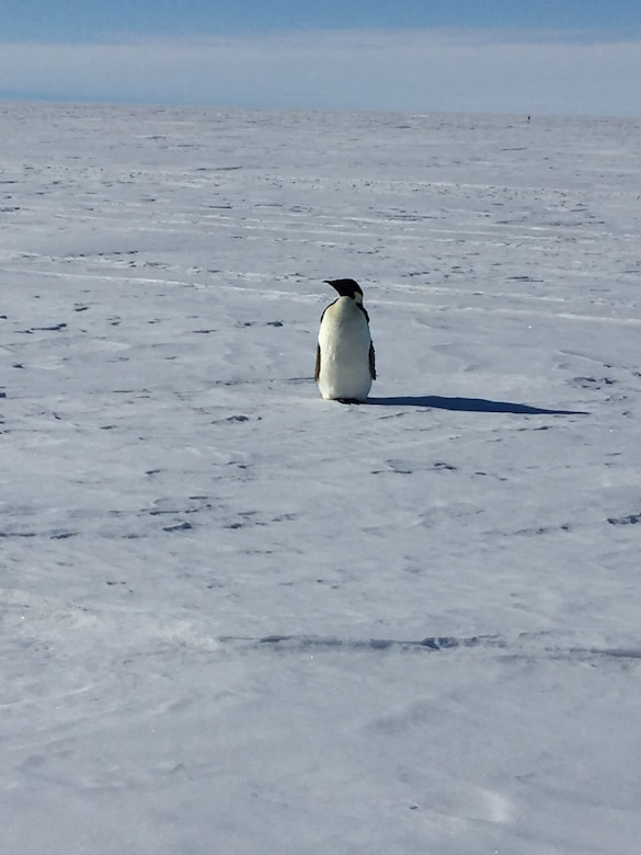 Chief Master Sgt. James Masura Jr., 313th Airlift Squadron loadmaster, took a photo of his very first penguin sighting on his record setting 100th Operation Deep Freeze mission providing C-17 Globemaster III logistical support the National Science Foundation's Antarctic research stations. (Courtesy photo)