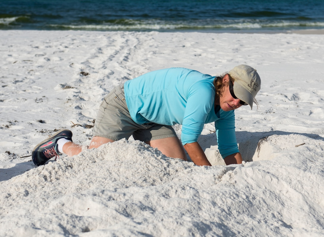 Nests from four threatened or endangered sea turtle species were discovered this year on the Eglin reservation.