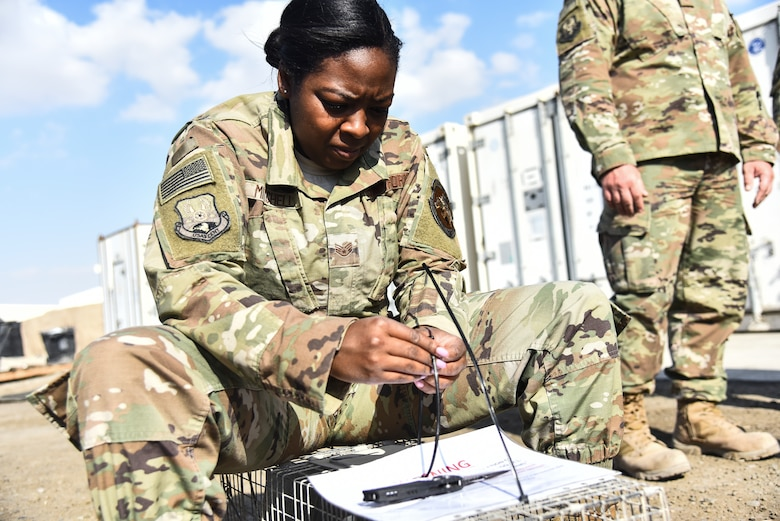 Staff Sgt. Caitlin Mitchell, 380th Expeditionary Civil Engineer Squadron pest management craftsman, labels a trap at Al Dhafra Air Base, United Arab Emirates, Feb. 18, 2019. Through the power of teamwork, the Airmen and Soldiers from ADAB and Camp Arifjan, came together to benefit the quality of life for all service members, and even the wild animals. (U.S. Air Force photo by Senior Airman Mya M. Crosby)