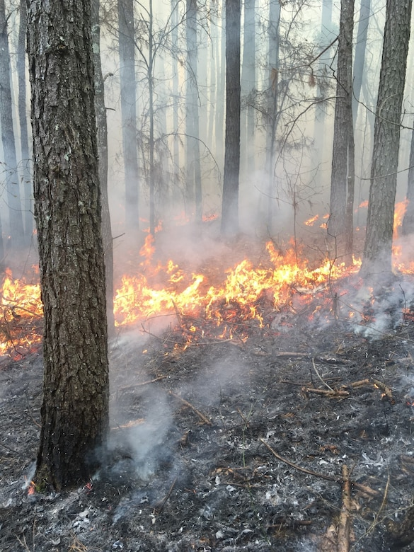 Prescribed fire is the most efficient and economical tool when managing natural ecosystems, allowing land managers to alter and improve the native ecosystems without utilizing more costly methods such as bush hogging, under brushing, and herbicide applications. Pictured is a prescribed fire, or controlled burn, at Arnold Air Force Base. (Courtesy photo)