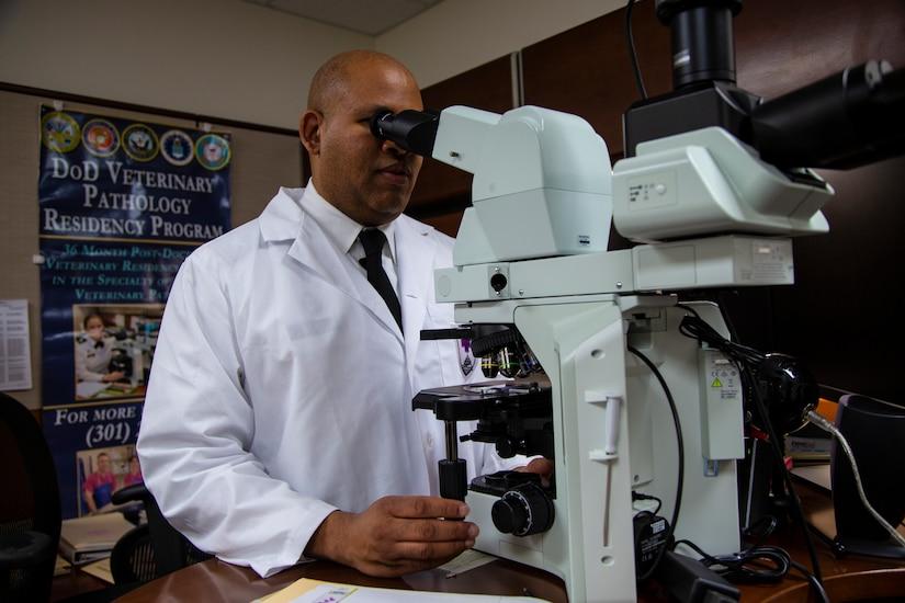 Examining tissue through microscope