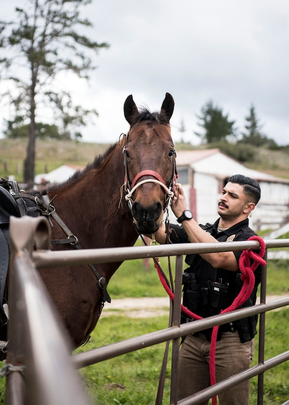 Staff Sgt. Bert Mantilla, 30th Security Forces Squadron conservation patrolman, puts a bridle on Military Working Horse Trooper Feb. 21, 2019, at Vandenberg Air Force Base, Calif. Trooper entered active duty at Vandenberg in 2010 and has helped to patrol 99,600 acres of hard to reach areas on Vandenberg, assisted on scene during riots and protests and has aided local law enforcement agencies in locating missing hikers. (U.S. Air Force photo by Airman 1st Class Hanah Abercrombie)