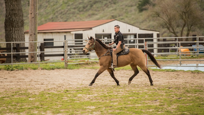 """Senior Airman Michael Terrazas, 30th Security Forces Squadron conservation patrolman, does arena work with Military Working Horse """"Buck"""" Feb. 21, 2019, at Vandenberg Air Force Base, Calif. Arena work is done to practice maneuvers, keep the horses exercised, and to ensure the horses and patrolmen are working well together before going out into the field. (U.S. Air Force photo by Airman 1st Class Hanah Abercrombie)"""