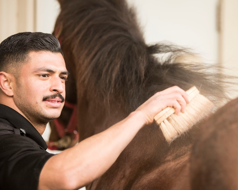 """Staff Sgt. Bert Mantilla, 30th Security Forces Squadron conservation patrolman, brushes Military Working Horse """"Trooper"""" before their ride Feb. 21, 2019, at Vandenberg Air Force Base, Calif. Trooper is a 14 year old American quarter horse who entered active duty in 2010 and helps to patrol 99,600 acres of hard-to-reach areas on Vandenberg with his patrolman. (U.S. Air Force photo by Airman 1st Class Hanah Abercrombie)"""