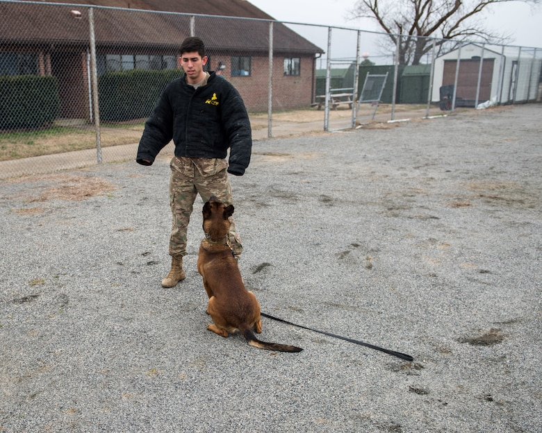 U.S. Air Force Senior Airman Anthony Seretis, 633rd Security Forces Squadron military working dog handler, stands still as Ali, 633rd SFS military working dog, stands guard at Joint Base Langley-Eustis, Virginia, March 08, 2019.