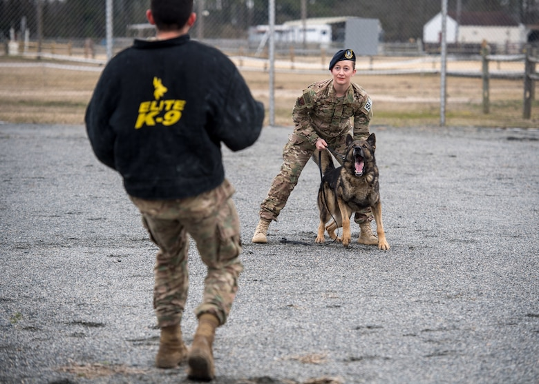 U.S. Air Force Senior Airman Samantha Snyder, 633rd Security Forces Squadron military working dog handler and Rendi, 633rd SFS military working dog prepare to apprehend Senior Airman Anthony Seretis, 633rd Security Forces Squadron military working dog handler, at Joint Base Langley-Eustis, Virginia, March 08, 2019.