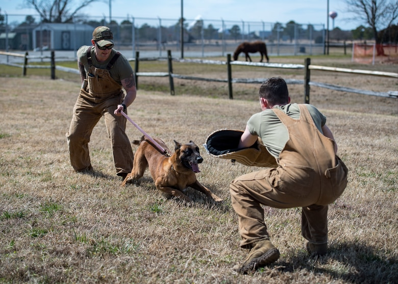 U.S. Army Sgt. Aaron Vinson and Specialist Kyle Pereira, Training and Doctrine Command 3rd Military Police Detachment police drug detection dog handlers train military working dog Uunion at Joint Base Langley-Eustis, Virginia, March 11, 2019.