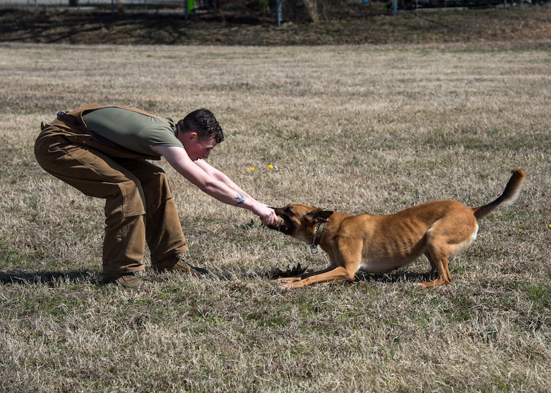 U.S. Army Specialist Kyle Pereira, Training and Doctrine Command 3rd Military Police Detachment police drug detection dog handler plays with military working dog Maya at Joint Base Langley-Eustis, Virginia, March 11, 2019.