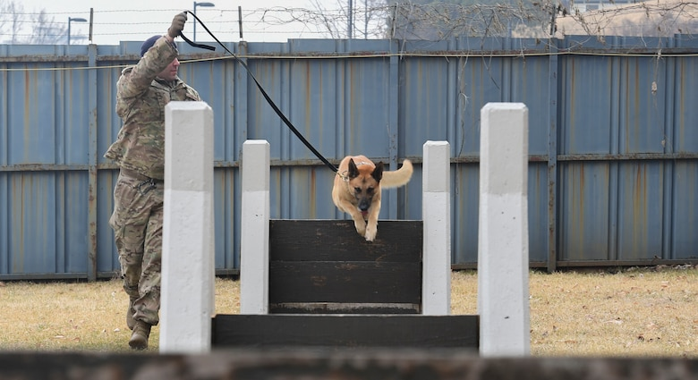 A military working dog jumps over a training course obstacle