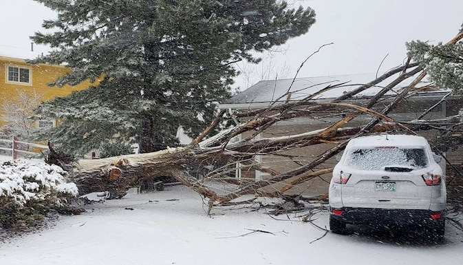 Bomb cyclone wind gusts uprooted this tree that lies on top of a vehicle during a blizzard in Colorado Springs, Colorado, March 13, 2019.