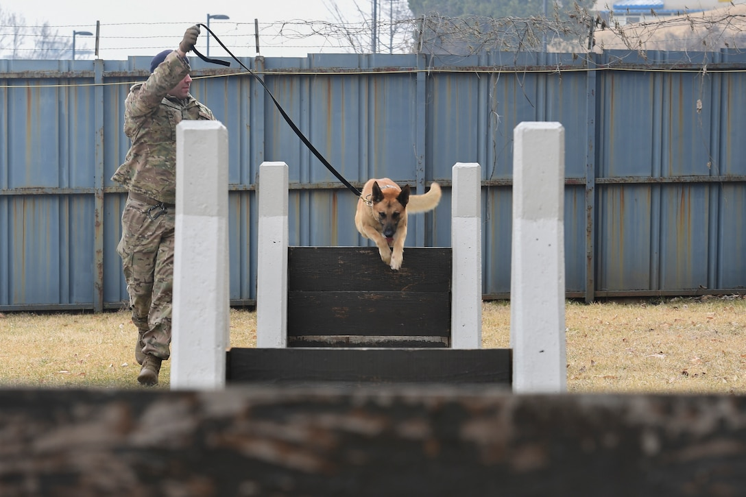 A dog jumps over an obstacle on a training course.