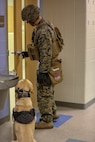 Cpl. Bruce Russell, military working dog handler, 2nd Law Enforcement Battalion, opens a door to inspect a room as his military working dog waits for his command during an exercise on Marine Corps Base Camp Lejeune, North Carolina, March 21. This exercise trains patrol explosive detector dogs to detect explosives in a combat environment.