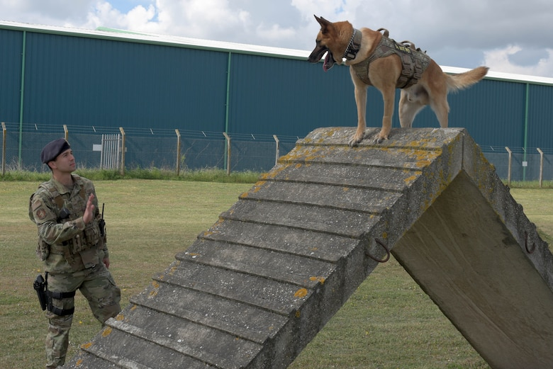 U.S. Air Force Staff Sgt. Camron Quaranto, 100th Security Forces Squadron military working dog handler, commands his partner Tomi to stop during the obstacle course at RAF Mildenhall, England, May 2, 2019. Military working dogs and their handlers train daily on various techniques such as: bite-work, scouting, detection, obedience and the obstacle course. (U.S. Air Force photo by Senior Airman Benjamin Cooper)