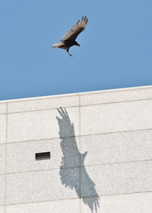 Bird flying with shadow on building