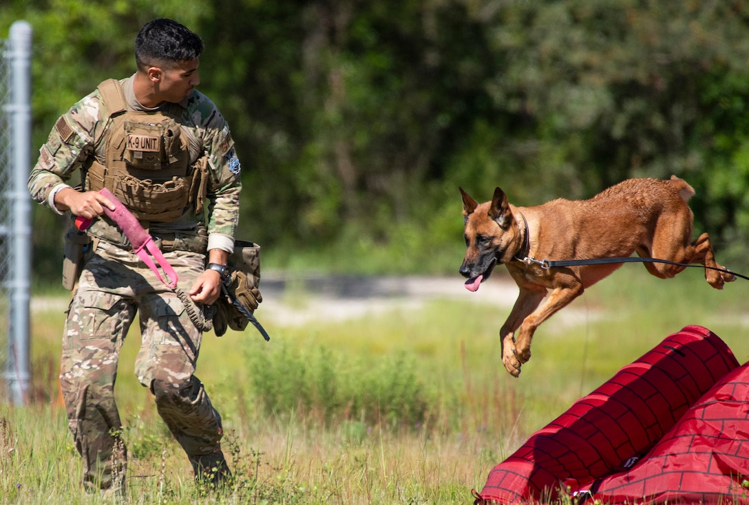 K-9 Competition