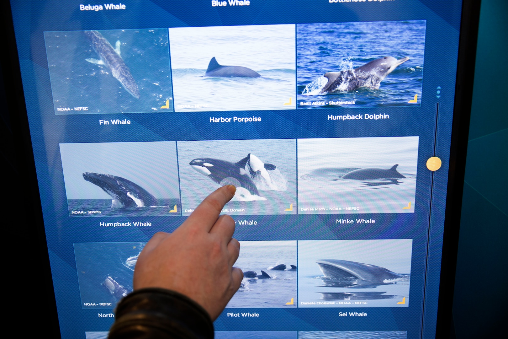 The Stewards of the Sea exhibit, which opened in 2013, highlights marine mammal research and shipboard environmental protection at Nauticus.