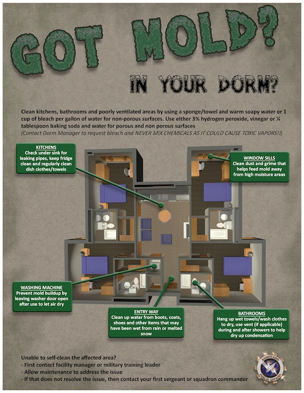 This infographic touches on preventive measures and in-home treatments for mold.