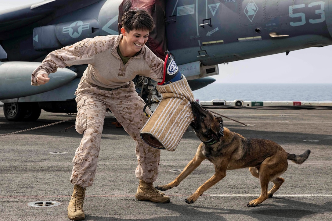 A dog bits the arm of a Marine.