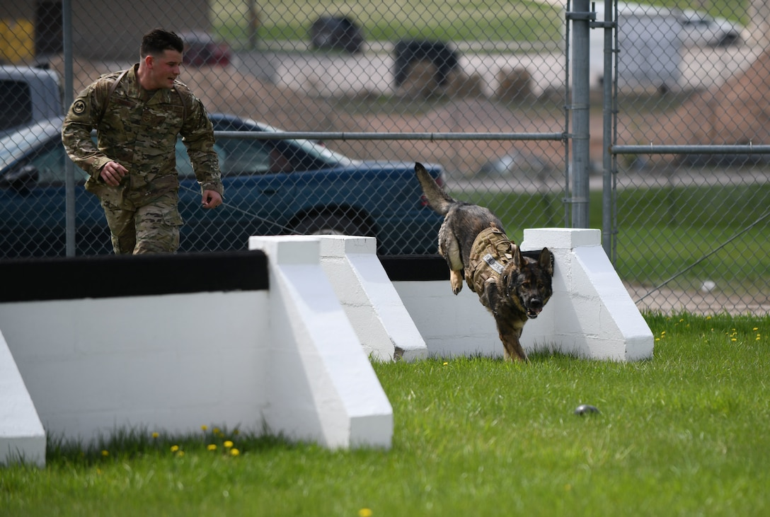 Senior Airman Chase Loggins, a 28th Security Forces Squadron military working dog handler, guides MWD Boris through the obstacle course at the 28th SFS K-9 Facility on Ellsworth Air Force Base, S.D., May 16, 2019. The K-9 obstacle course was designed to prepare MWDs and their handlers for challenges they may encounter in the field. (U.S. Air Force photo by Airman 1st Class Christina Bennett)