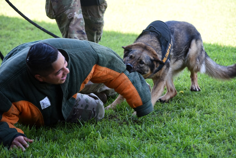 Military Working Dog Nika attacks Staff Sgt. Desi Padilla during a training demonstration at the Tinker Main Exchange May 13. Their six-phase aggression session shows the public how the dogs respond to compliant and non-compliant people with and without commands depending on the severity of the situation. (U.S. Air Force photo/Kelly White)
