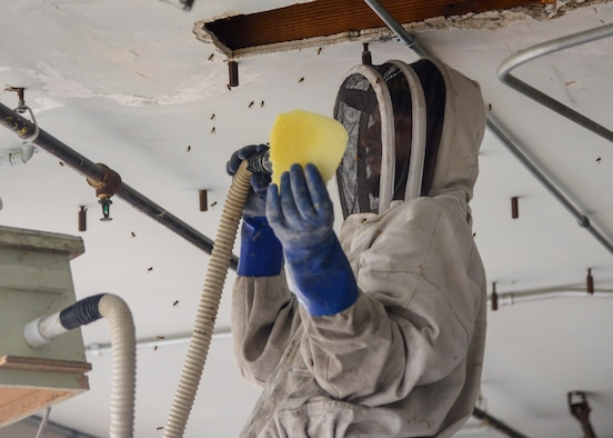 Pedro Huertas, a bee keeper from BeeGreen bee removal, removes a honey comb from a bee hive located behind the Airman's Attic on Edwards Air Force Base, Calif, May 23. (U.S. Air Force photo by Giancarlo Casem)