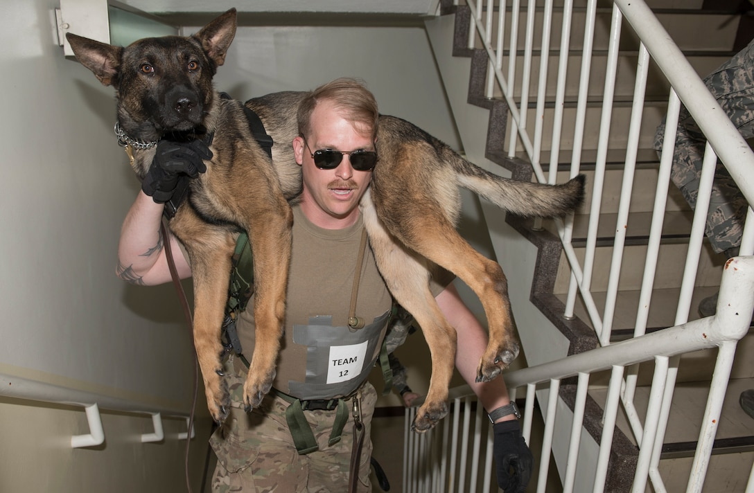 Staff Sgt. David Ferro, 374th Security Forces Squadron military working dog handler, carries his MWD, Bunko, up a flight of stairs during Yokota's 2019 National Police Week Iron Dog competition, May 24, 2019, at Yokota Air Base, Japan.